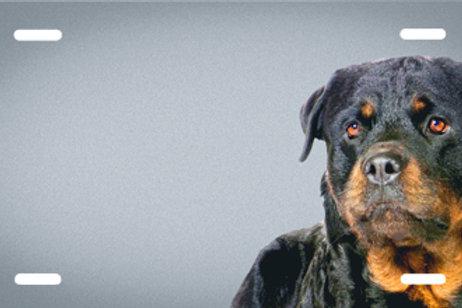 LP00396-Rottweiler