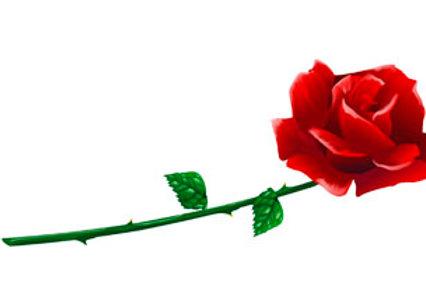 LP00140-Red Rose on White