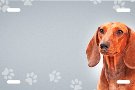 LP00419-Dachshund with Paws