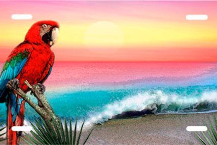 LP00590-Parrot Sunset