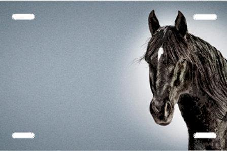 LP00417-Black Horse