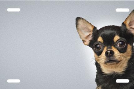 LP00476-Chihuahua