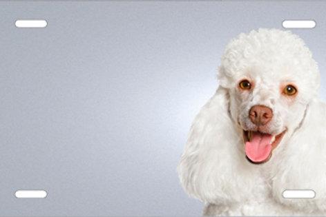 LP00406-Poodle
