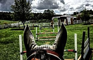 Wolf Equestrian LLC