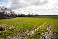 Stoop field 1