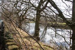 Manor Farm Pond