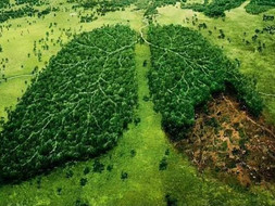 Travesty to lose lungs of the planet (trees etc).