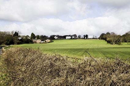Hall Lane Farmland