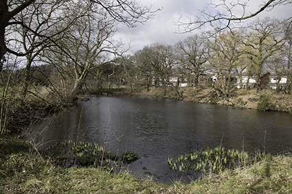 Local Pond Overlooked by Houses