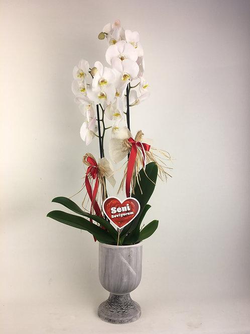 Antik Vazoda 2 Dallı Orkide