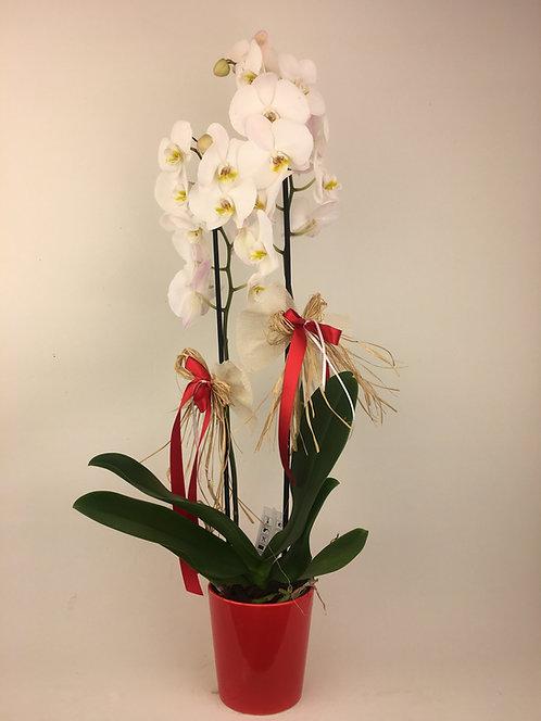 Kırmızı Vazoda 2 Dallı Orkide