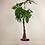 Thumbnail: Pachira Aquatica-Örgülü Para Çiçeği