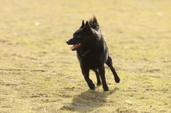 DOG_0142
