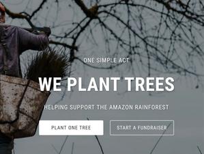 Comment Aider la Forêt Amazonienne ? 6 Pistes à Explorer