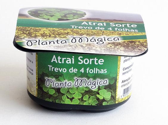 Planta Mágica - Trevo 4 Folhas