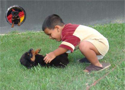 DKV-Rottweilers-Family-5