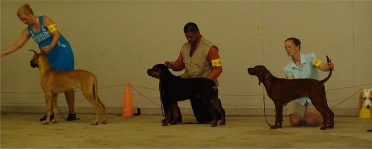 DKV-Rottweilers-Breeder-9