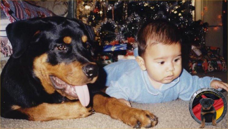 DKV-Rottweilers-Family-3