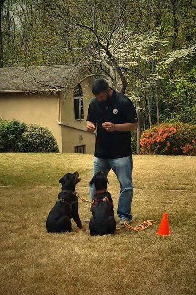 DKV-Rottweilers-Trainer-1