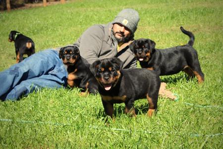 DKV-Rottweilers-Family-10