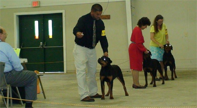 DKV-Rottweilers-Breeder-8