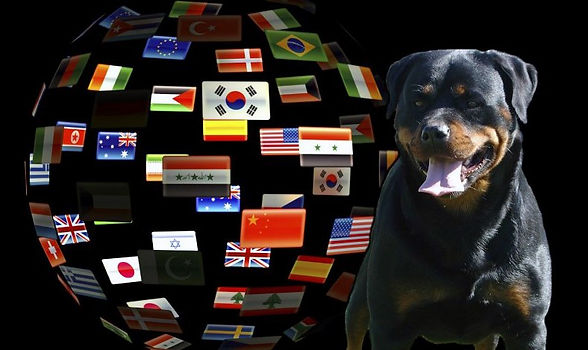 dkv-rottweilers-rottweiler-puppies-for-s