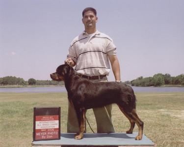 DKV-Rottweilers-Breeder-4