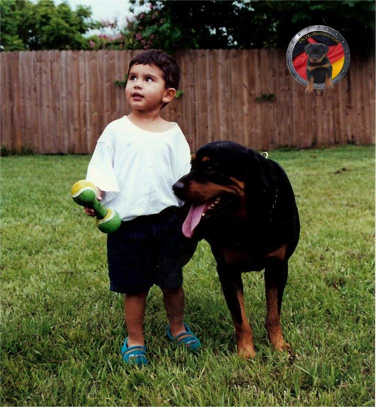 DKV-Rottweilers-Family-6