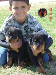 DKV-Rottweilers-Family-9