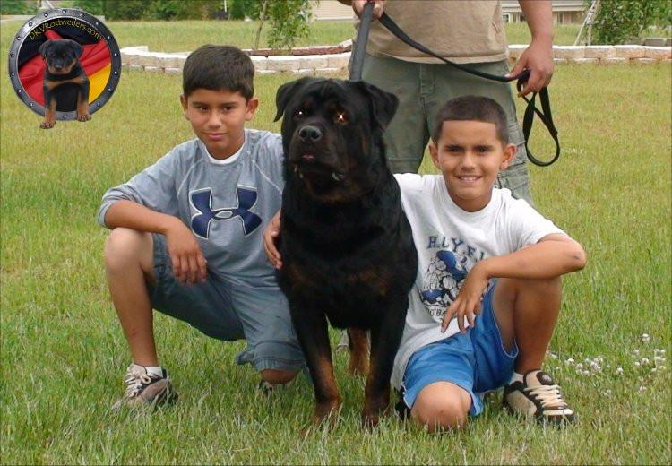 DKV-Rottweilers-Family-8