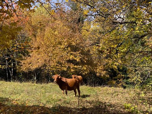 Autumn colors in Méribel