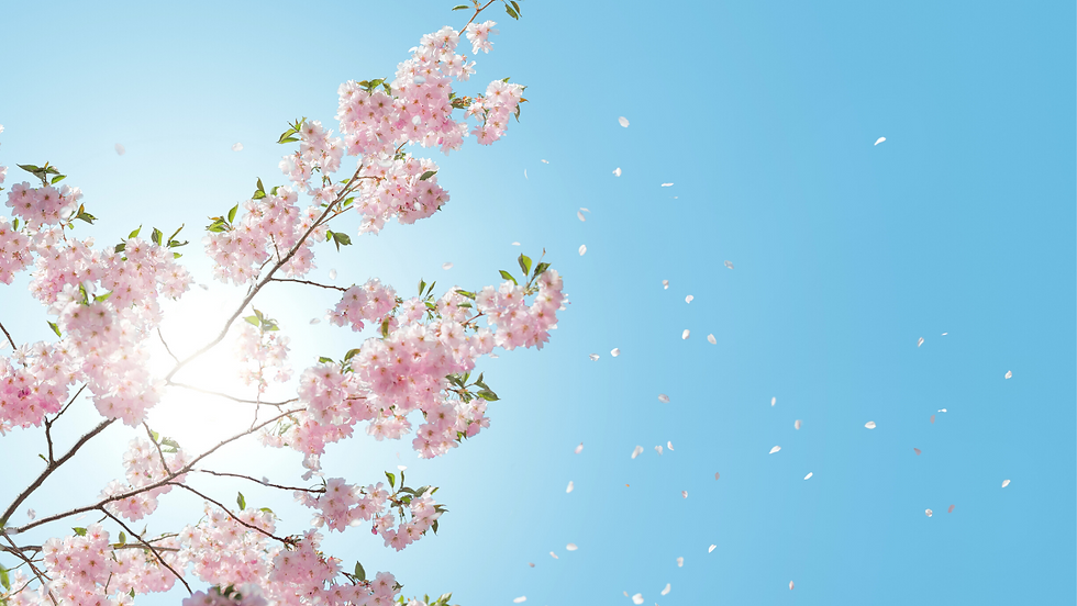 Couverture Facebook avec des fleurs de cerisier (1).png