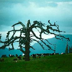 Ghost Tree, New Zealand