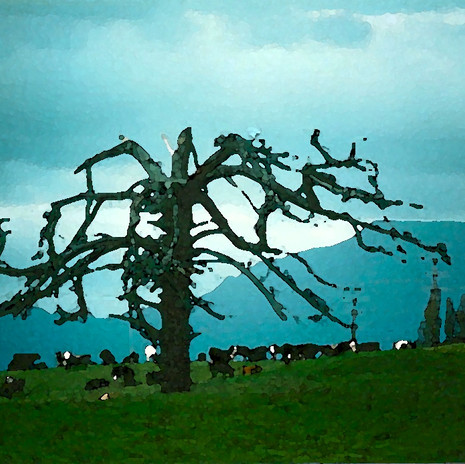 Ghost Tree, New Zealand