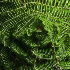 Ferns, New Zealand