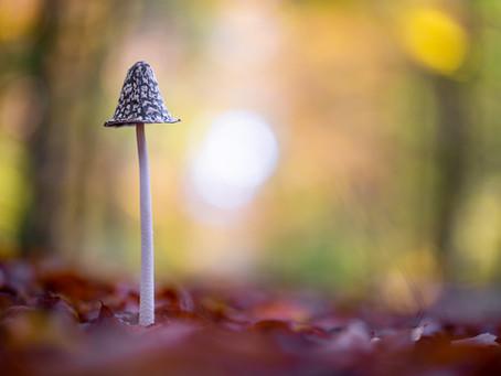 Pilzfotografie: eine entspannte und spannende Sache zugleich