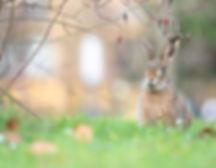 Säugetiere-9.jpg