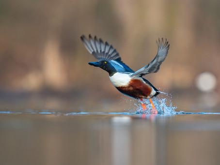 Kurzer Ausflug zu den Wasservögeln