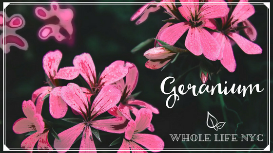 Essential Oil Spotlight: Geranium