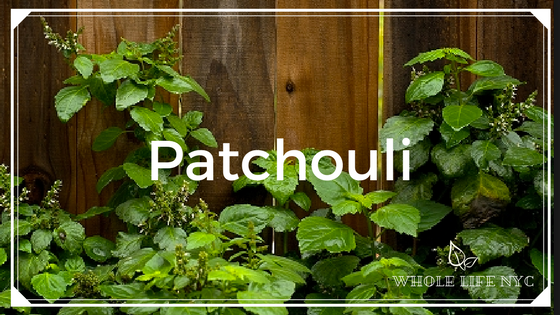 Essential Oil Spotlight: Patchouli