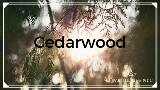 Oil spotlight: CEDARWOOD