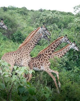 Arusha Park Day Trip Kaliwa Lodge.jpg