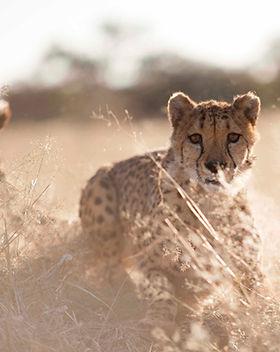 Serengeti Expedition Kaliwa Lodge.jpg