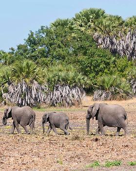 Northern Tanzania Expedition Safari Kali