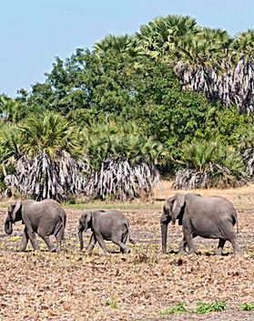 Northern Tanzania Expedition Safari Kali