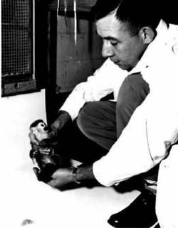 Gordo the Squirrel Monkey - 1958