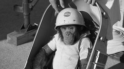 Sam the Chimpanzee - 1961