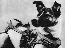 Laika the Dog - 1957