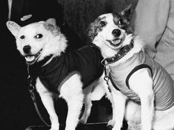 Belka and Strelka the Dogs - 1960
