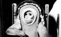 Sam the Rhesus Monkey - 1959